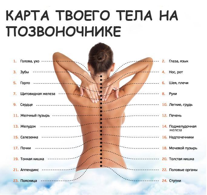 vertebra_1
